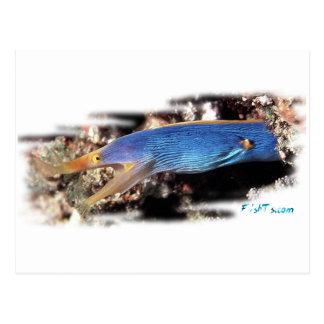 Blue Ribbon Eel Postcard