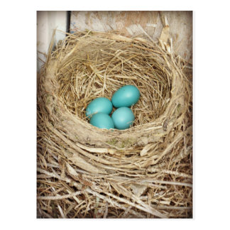 Blue Robin Egg Photographic Postcard