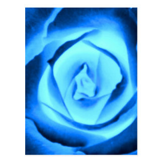 Blue Rose Bud Postcard