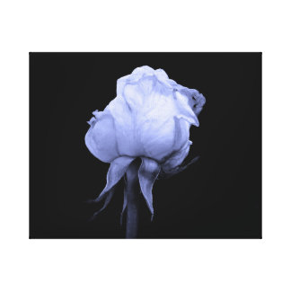 Blue Rose Flower Canvas Print