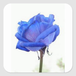 blue-rose square sticker
