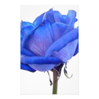blue-rose stationery
