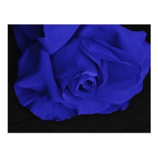 Blue Roses 3 Postcard