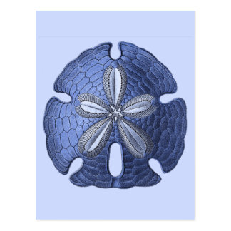 Blue Sand Dollar Postcard