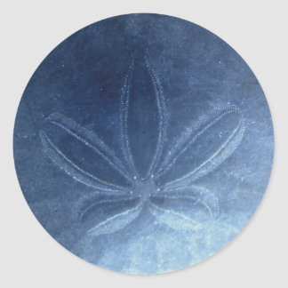 Blue Sand Dollar Sticker