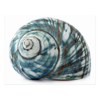 Blue Sea Shell Postcard