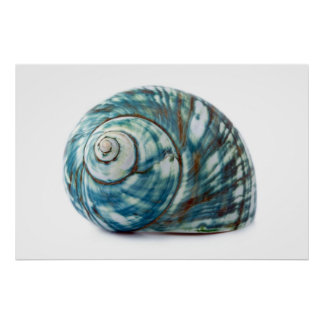 Blue Sea Shell Poster