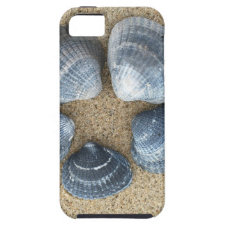 Blue shells iPhone 5 covers