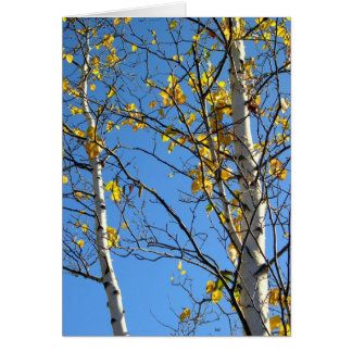 Blue Skies and Birch Trees, Blank Note Card