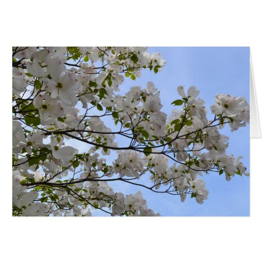 Blue Skies and Dogwood Flowers Cards