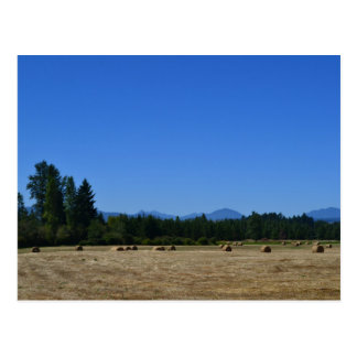 Blue Sky and Hay Bales Postcard