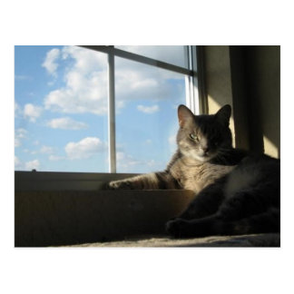 Blue Sky Cat Postcard