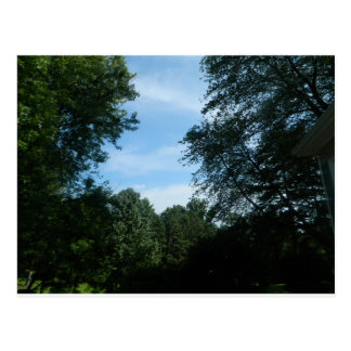 Blue sky with trees image postcard