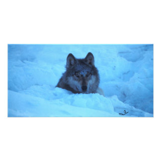 Blue Snow Timber Wolf Photo Card