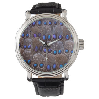 Blue spotted pheasant feather watch