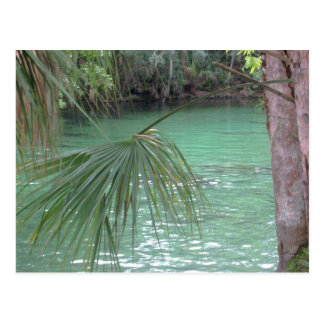 Blue Springs Florida Palm Postcard
