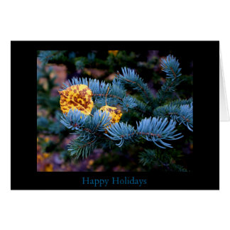 Blue Spruce Holiday Card