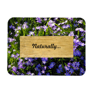 Blue Squill Spring Flowers Rectangular Photo Magnet