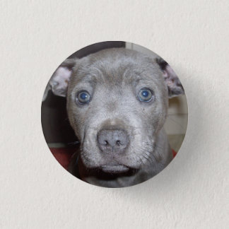 Blue Staffordshire Bull Terrier Puppy Button Badge