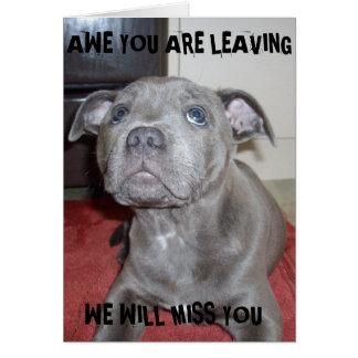 Blue Staffordshire Bull Terrier Puppy, Card
