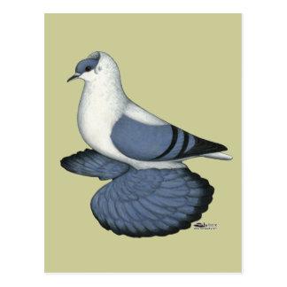 Blue Swallow Pigeon Postcard