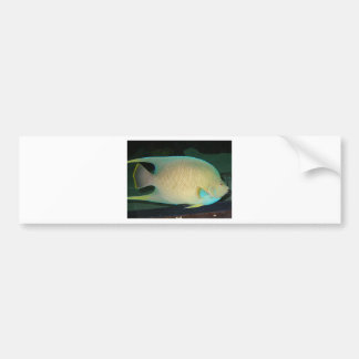 Blue-Tan-Green Tropical Fish Swimming in Water Bumper Sticker