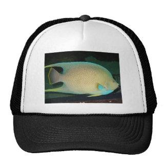 Blue-Tan-Green Tropical Fish Swimming in Water Cap