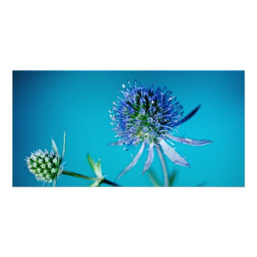 blue thistle blossom customized photo card