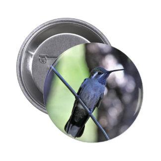 Blue Throated Hummingbird Pin