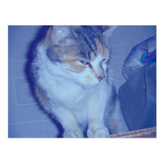 Blue Tone Calico Kitty Postcard