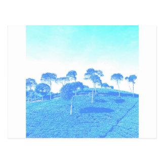 Blue Trees Postcard
