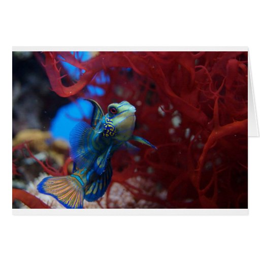 Blue tropical fish greeting cards