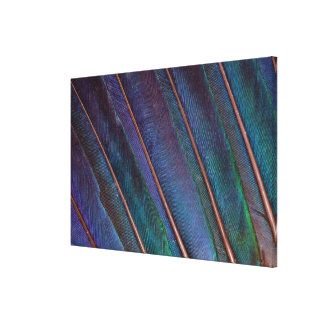 Blue Turaco Feathers Canvas Print