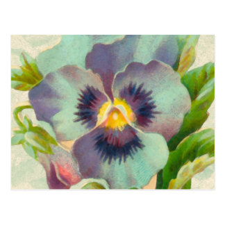 Blue Vintage Pansy Watercolor Postcard