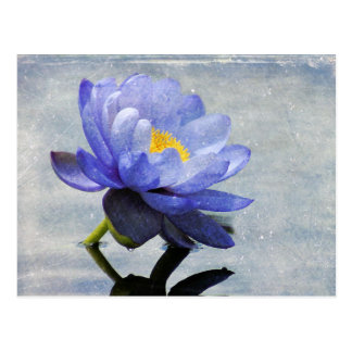 Blue Water Lily postcard