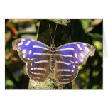 Blue Wave Butterly Stationery Note Card
