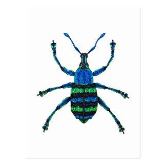 Blue Weevil Postcard