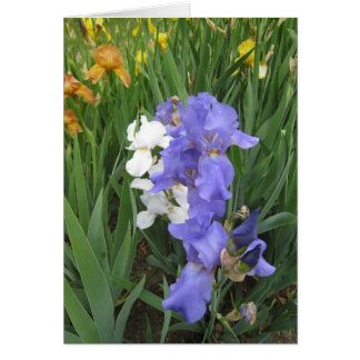 blue white amber small blank note card