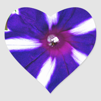 Blue, White and Purple Morning Glory Heart Sticker