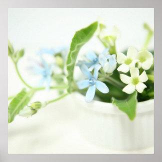 Blue & White flower Poster