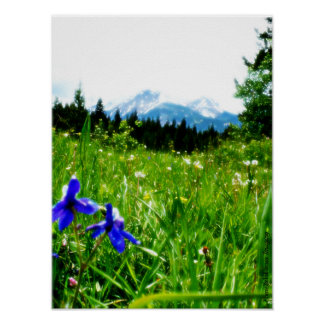 Blue Wildflowers by Mountain Peaks Poster
