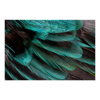 Blue Wing Covert feathers Poster