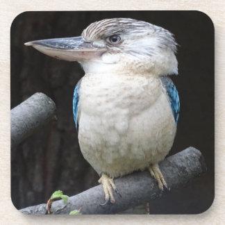 Blue-winged kookaburra coaster