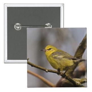 Blue winged Warbler, Vermivora pinus 15 Cm Square Badge