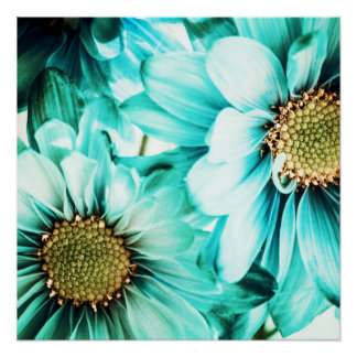 Blue & Yellow Daisies Poster