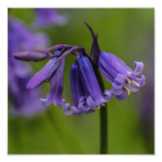 Bluebell Flower Photo Print