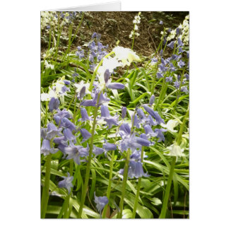 Bluebell Photos / details 2 - Spring 2016 Card
