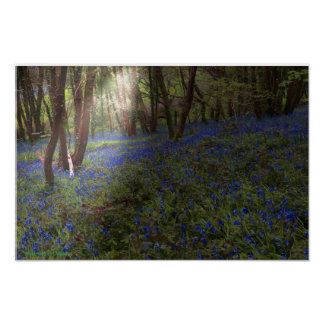 Bluebell Wood England Sunbeam Breaking Through Poster