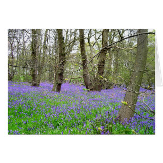 Bluebell Wood greetings card