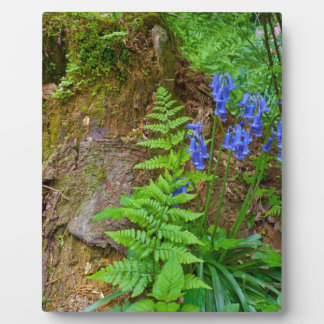 Bluebell wood photo plaque